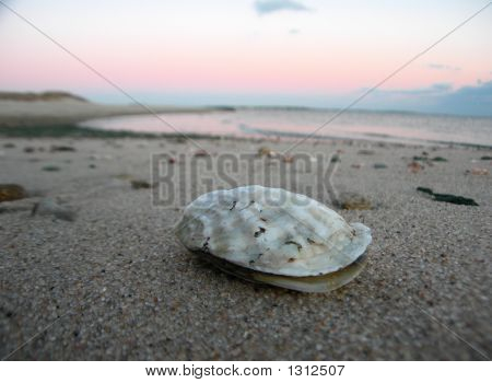 Oyster On Cape Cod