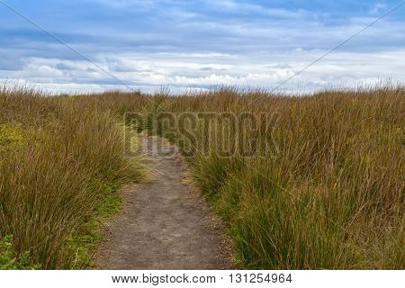Natural walking path across tall button grass and other creeping ground cover plants at Cape Nelson Conservation reserve at at Cape Bridgewater in Victoria, Australia