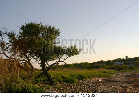 Crooked Tree Horizontal