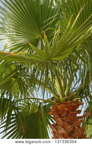 close up of palm tree over blue sky
