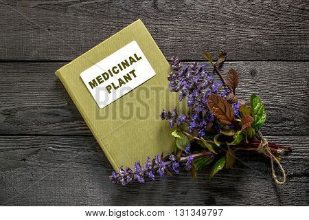 Medicinal plant Ajuga reptans and herbalist handbook. Ajuga reptans - edible plant nectariferous and is used in horticulture