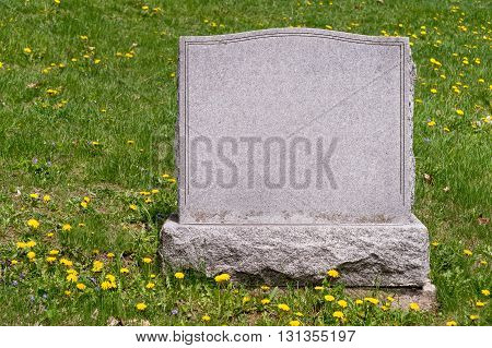 Blank headstone in cemetery on grass with dandelions