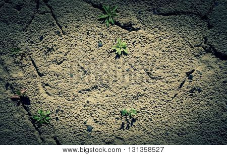 Desert ground with green sprouts texture background