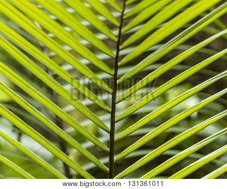 Pattern Of Palm Leaves In The Jungle In Dominica