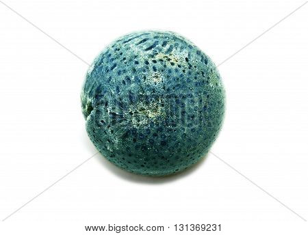 Rounded sphere of native blue coral mineral healing