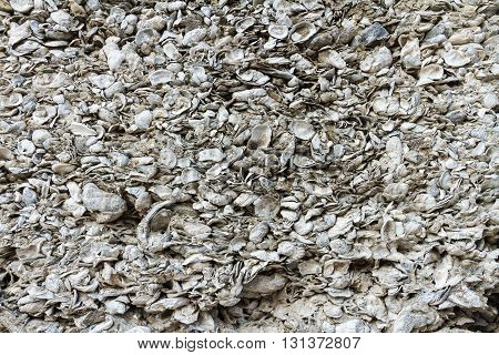 A wall made of coquina the hard deposit of compacted shells