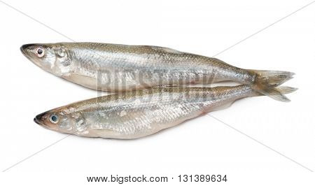 Smelt fishes isolated on white background