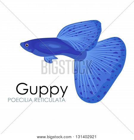 Cute Aquarium fish Guppy vector illustration isolated on white background. vector illustration icon. Fish flat style vector illustration. Fish icons isolated. Tropical fish, sea fish, aquarium fish set isolated on white background. Sea color flat design f