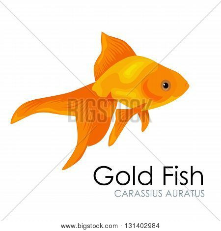 Cute Aquarium Gold Fish vector illustration isolated on white background. vector illustration icon. Fish flat style vector illustration. Fish icons isolated. Tropical fish, sea fish, aquarium fish set isolated on white background. Sea color flat design fi