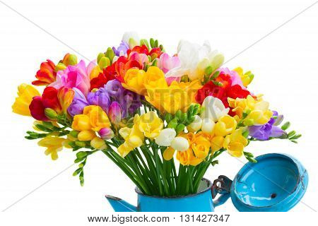 Fresh freesia flowers posy in pot close up isolated on white background
