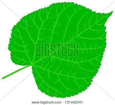 linden ,lime, teil, lime-leaf, vector, isolated linden leaf