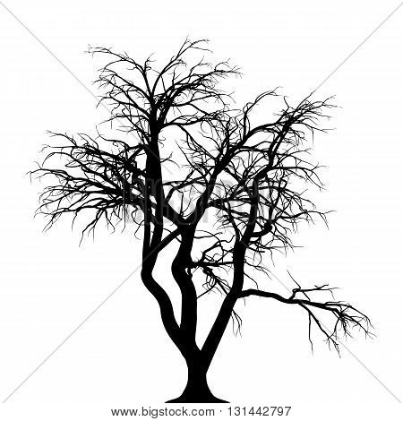 a silhouette of a creepy tree for halloween