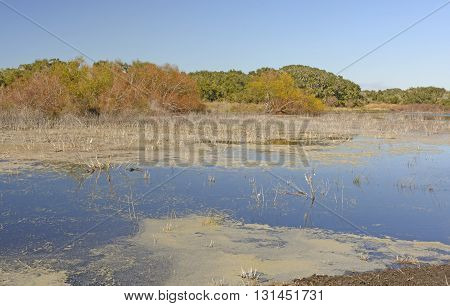 Jones Lake in Aransas National Wildlife Refuge in Texas