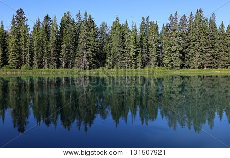 An evergreen tree line reflecting in the Bow River. Shot in Banff National Park Alberta Canada.