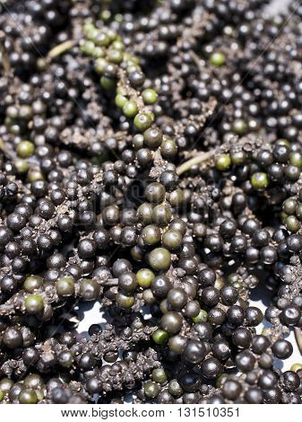 Black Peppercorns or Piper Nigrum for Background.