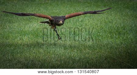 Hawk, caracara, eagle, falcon, kestrel in monasterio de piedra, Zaragoza, Aragon Spain