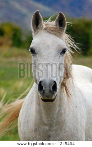 Equine54