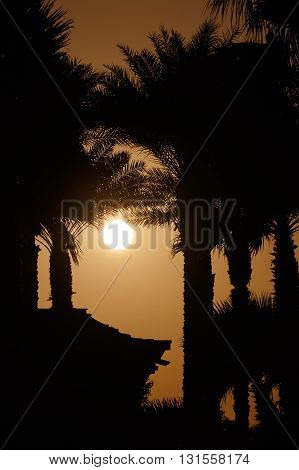 view on sunset behind palm trees and house