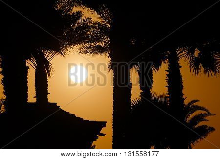 view on sunset behind palm trees in Dubai