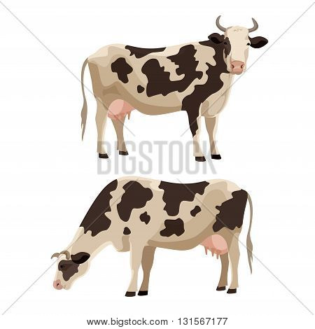 Spotted cow vector illustration farm cattle animal collection.