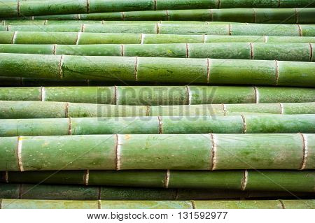Detail of green bamboo trunks heap China