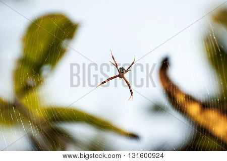 Spider on a spider web with defocussed background
