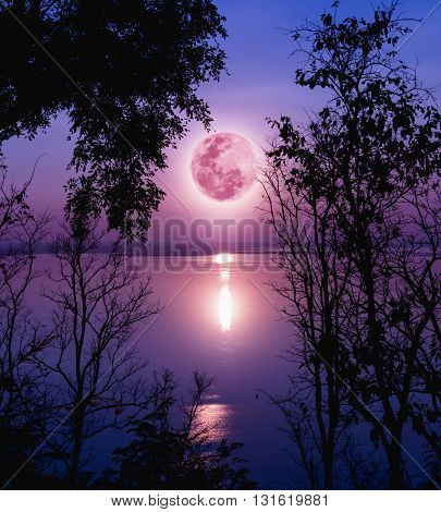 Tree against purple sky over tranquil lake. Silhouettes of woods and beautiful moonrise bright full moon would make a nice picture. Beauty of nature use as background. Outdoors. poster