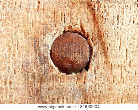 Close up of the head of an old rusty nail embedded in an oak truss