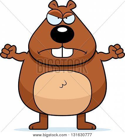 Beaver Angry