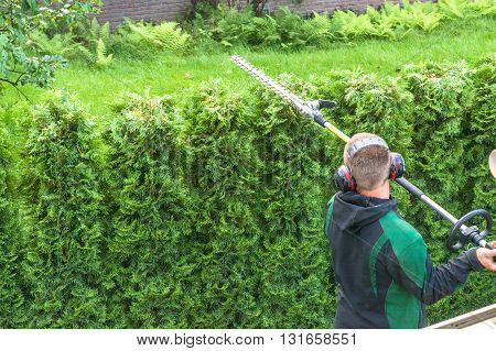 Hedge trimming works in a garden. Professional gardener with a professional garden tools at work.