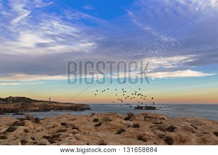 Landscape sunset view of Rock dove birds flying above rugged limestone coastline in the evening at Cape Dombey in Robe, South Australia.