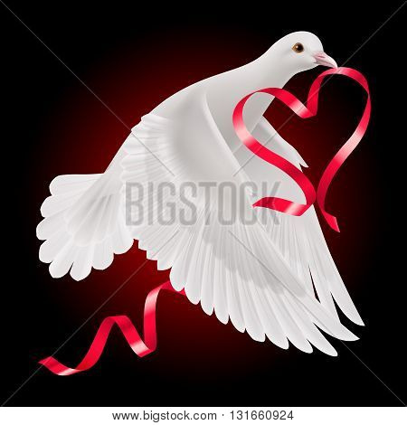 White dove with red ribbon on the dark background.