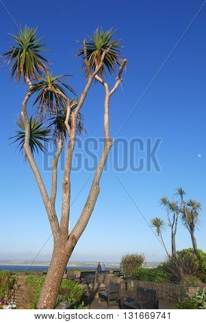 View of trees in St. Ives, Cornwall, England.