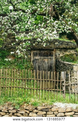 White blooming flowers growing near wooden picket fence in traditional garden with door and stony decoration on green grass outdoor