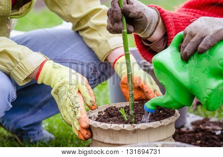 transplant flowers plant in spring, garden watering, hand