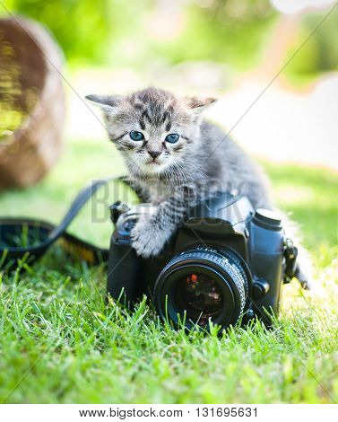 a gray kitten with noname camera, outdoor