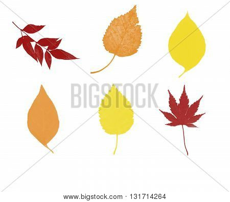 Six autumn leaves in red, orange and yelow colors.