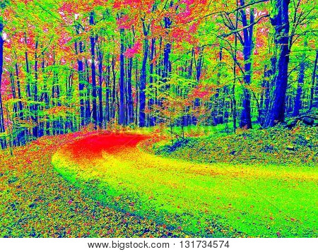 Forest Way  In Infrared Photo. Amazing Thermography.