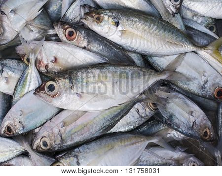Fresh Indian mackerel in the market, Thailand.