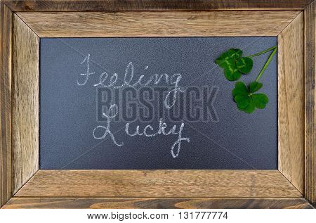 Feeling Lucky concept, five 5 leaf and four 4 leaf clover.  Conceptual symbol sign of luck.