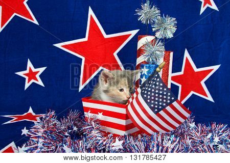 Patriotic calico kitten blue background with red stars outlined in white American flag kitten sitting in red and white stripped box tinsel with white stars on table in front of her.