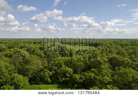 Russian forest with many trees and fields. White clouds flying in deep blue summer sky