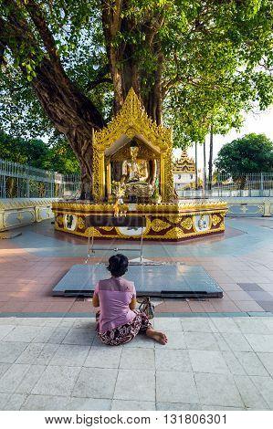 Yangon,  Myanmar - January 9, 2012: Religious in prayer in the Swedagon Pagoda.