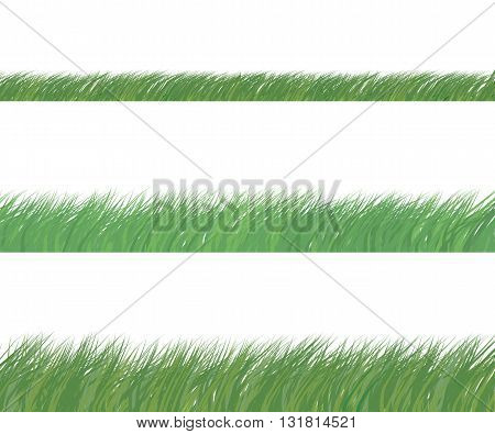 Set of green grass isolated. Vector illustration