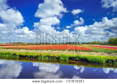 River and rows of nice red tulips in the field. Netherlands.