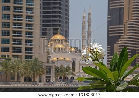 blossom of palm tree over mosque in Dubai
