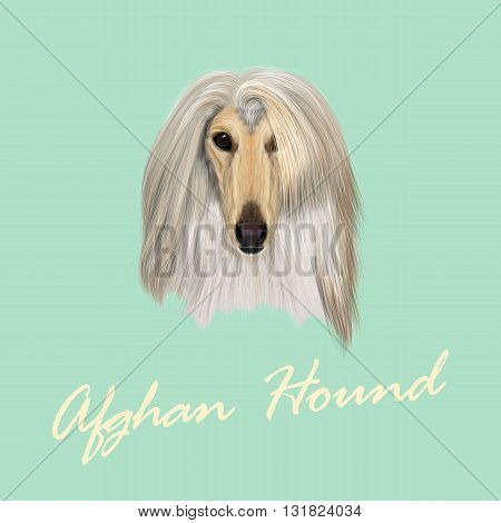 Vector Illustrated Portrait of Afghan Hound dog. Beautiful golden coat face of domestic dog on blue background.