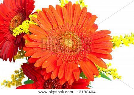 bright flowers. Gerbera.