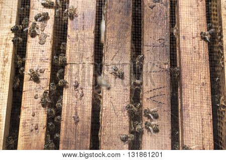 Close up of bees in bee hive frames on a sunny day