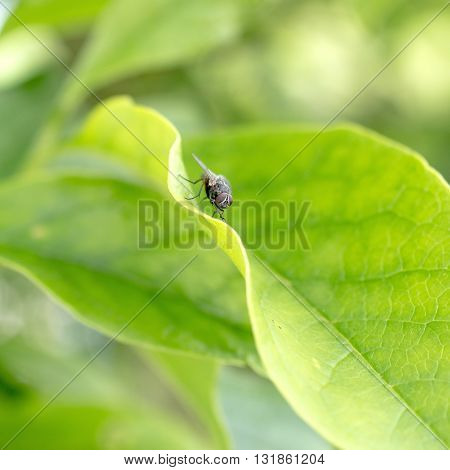 Close up photo of fly on a leaf. Natural light